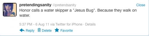 jesus bug